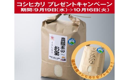 A4 農賊王のお宝 特別栽培米イクヒカリ[髙島屋選定品]CP