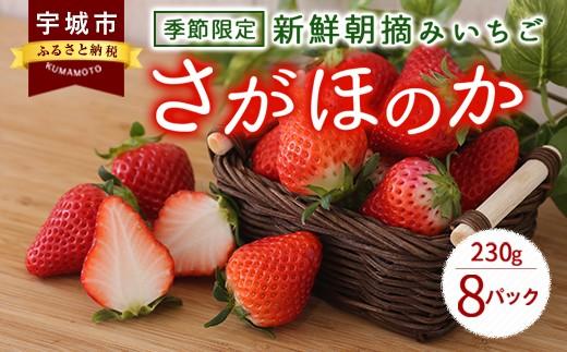 季節限定 新鮮朝摘みいちご「さがほのか」約230g×8パック