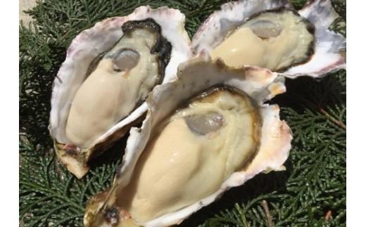 H-11 室津産殻つき牡蠣 ※殻付き3キロ