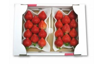 【期間限定】完熟 あまおうイチゴ 320g×2パック