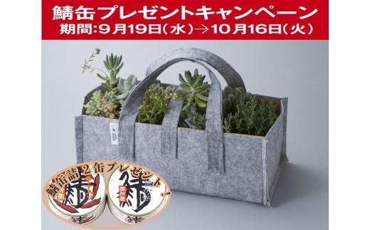 D14 多肉植物寄せ植え&ルーツポーチ[髙島屋選定品]CP