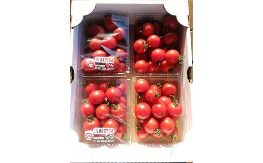 [A30-071]古村農園のフルーツトマト2kg(8月発送)