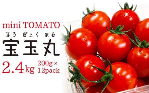 ◇【朝どり直送】高糖度ミニトマト「宝玉丸」2.4kg【2~3月発送】