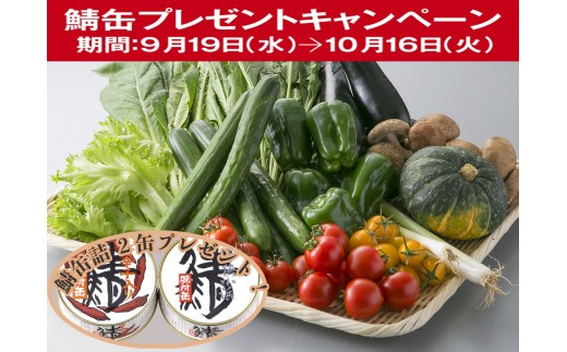 A10 小浜市の野菜セット[髙島屋選定品]CP