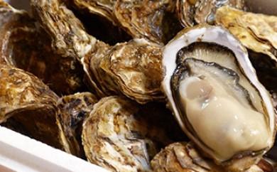 厚岸産殻付き牡蠣『マルえもん2Lサイズ15個セット』