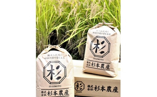 キヌヒカリ 精米10kg(5kg×2袋)(平成30年産米)【1049872】