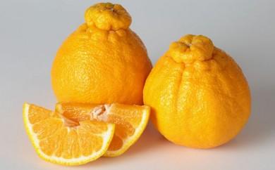 [№5772-0160]減農薬しらぬい ギフト2.5kg