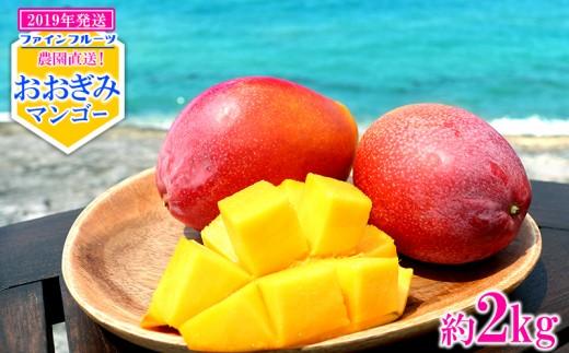【2019年発送】農園直送!ファインフルーツおおぎみマンゴー【約2kg】