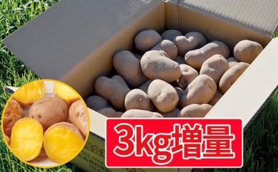 [№5724-0222]【3kg増量】幻のジャガイモ インカのめざめ約10kg