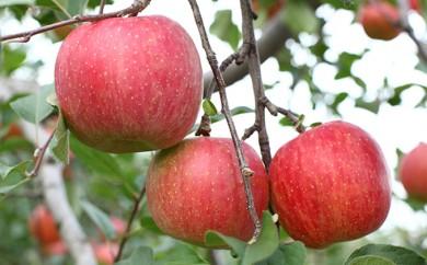 [№5724-0220]<2018年11月中旬よりお届け>りんご 北斗 約7.5kg(30~40玉) 【ご家庭用】