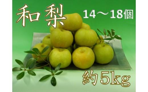 173 庄内のもぎたて和梨1箱約5kg