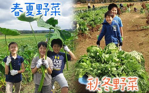 「カズサ愛彩ガーデンファーム」 お試し収穫体験(土日限定)