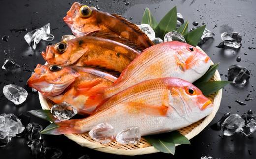 [A-5801] とれたてピチピチ 越前三国港 漁船「神力丸」 船長にお任せ鮮魚 お試し用 約2kg  まずは刺身でどうぞ!
