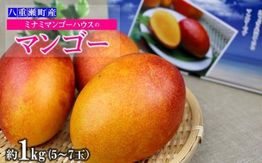 【2019年発送】ミナミマンゴーハウスのマンゴー約1kg(2~4玉)
