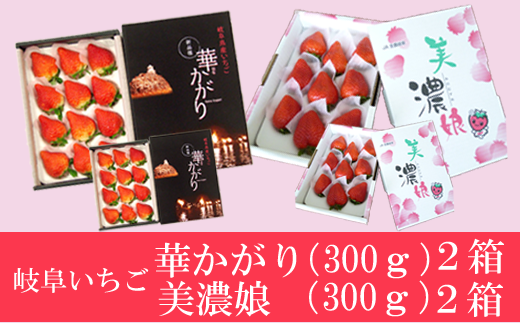 【40088】いちご果物岐阜いちご華かがりと美濃娘大粒で甘~い産地直送
