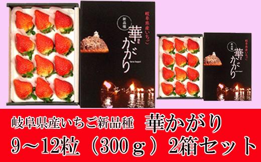【25041】いちご岐阜いちご華かがり甘くて大粒果汁たっぷりで高糖度2箱