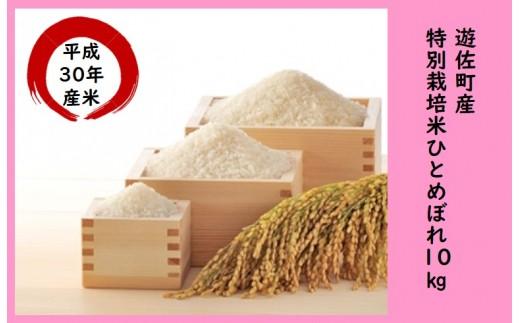 243M 遊佐町産特別栽培米ひとめぼれ10kg