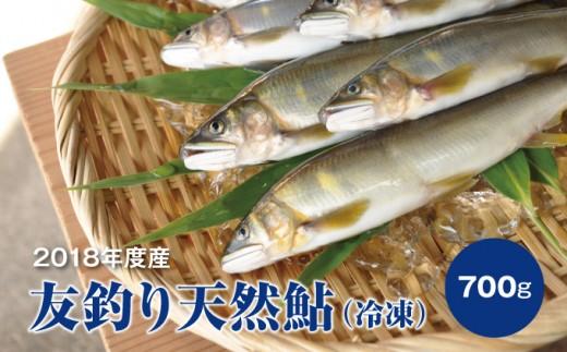 【感謝祭】産地直送!四万十中流域の友釣り天然鮎<冷凍>700g Qdr-5601