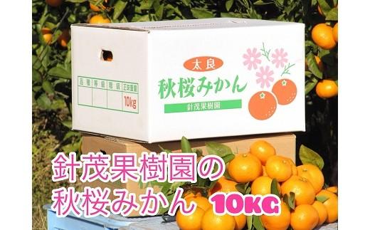 O-79 秋桜みかん 10kg