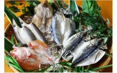 低温熟成製法により、刺身を超えた旨味!佐伯で創業100余年、魚の目利きが選ぶ厳選干物詰め合わせ