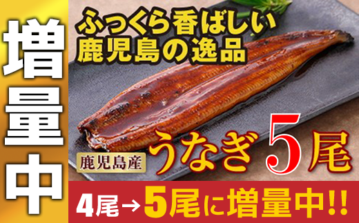 7802 【増量中】鹿児島産特上うなぎ5尾!