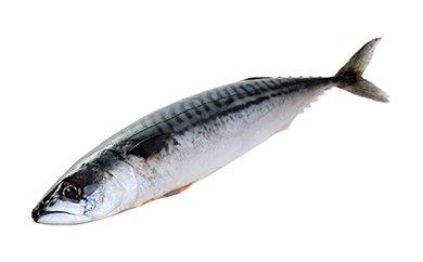 「愛海の恵み」 大分豊後水道産 天然真鯖(約2kg 3~4本)