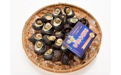 「愛海の恵み」大分豊後水道産 天然サザエ(約2kg)