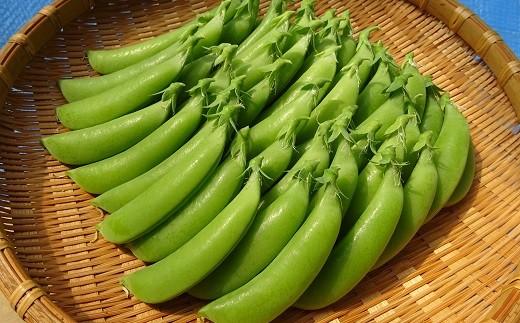[0823]高知県黒潮町産 米津農園のスナップエンドウ 2kg