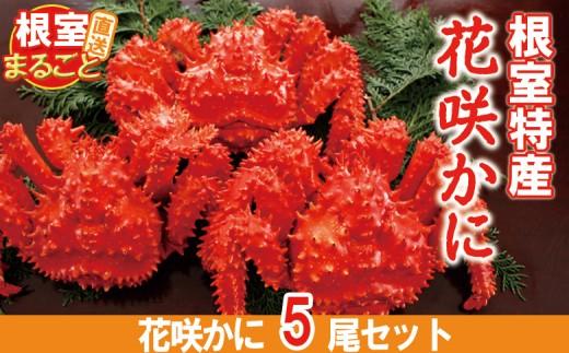 CC-33008 【北海道根室産】ボイル花咲ガニ500~600g×5尾