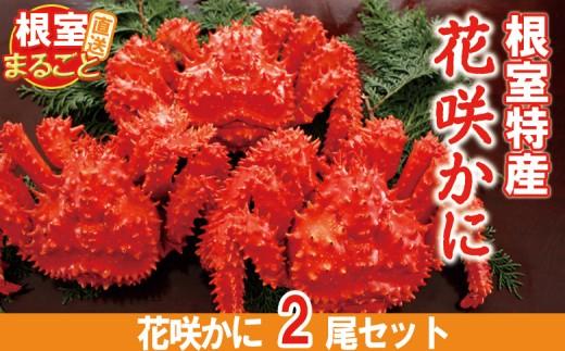 CC-33010 【北海道根室産】ボイル花咲がに700~800g×2尾
