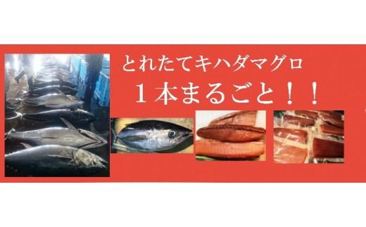 M18 とれたてビンヨコ(キハダマグロ幼魚)!1本まるごと!