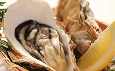 加賀市・橋立港産]素潜り漁の天然物 殻付き岩牡蠣 [生食用:岩カキ] ×10個(1個250~300g)