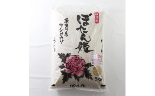 <地元ブランド>平成29年米 ぼたん姫玄米 5kg【1026184】