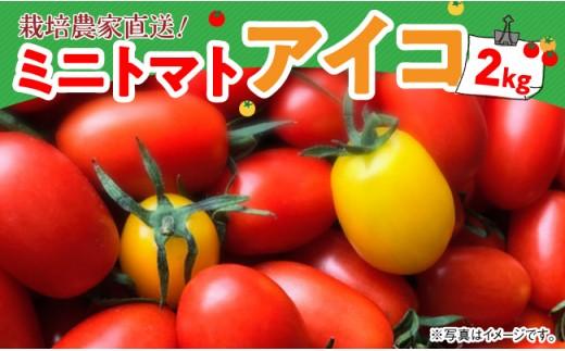 i3501「岩下農園」ミニトマト「アイコ」2kg