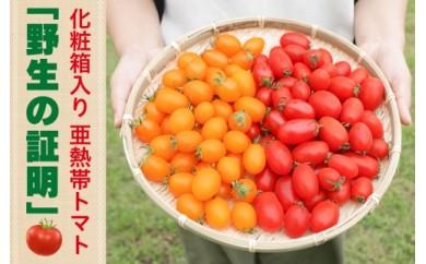 【2019年発送分】亜熱帯トマト「野生の証明」