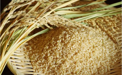 [№5564-0041]【平成30年産】景綱米(ひとめぼれ) 玄米10kg