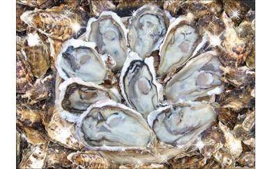 ★レンジで簡単★豊前海一粒牡蠣(大・小)食べ比べセット