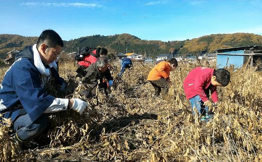 ★小川町×川島町★青山在来大豆の収穫体験と醤油仕込み見学