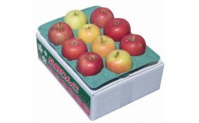 弘前産りんご詰め合わせ2~3種 家庭用(一段:9~10玉)
