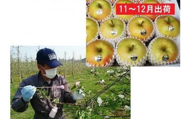 [№5731-0225]贈答用 キラ農法 特選完熟ぐんま名月約3kg※クレジットのみ