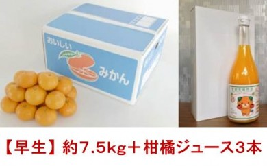 ≪予約受付中≫柑橘王国愛媛産温州みかん【早生】約7.5kg+柑橘ジュース3本
