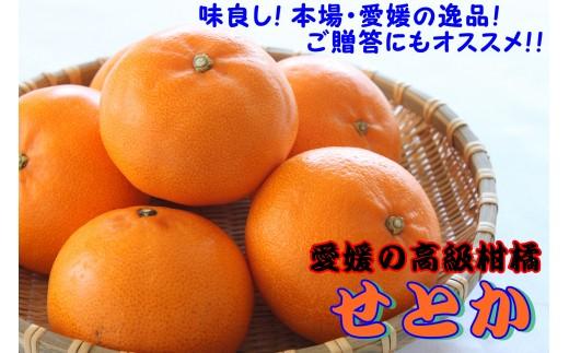 【2月末で終了!!】本場の高級柑橘「せとか」(最上級品・二段階選別!)