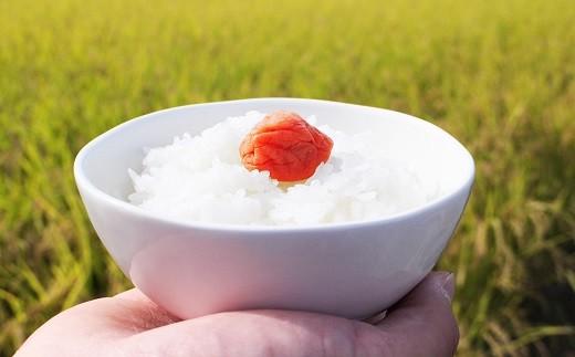 【新米】仁淀ブルーの恵み「おち米」 20kg