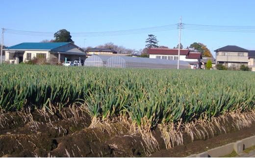 [№5674-0127]深谷に行こう!ねぎ収穫体験とお米5kg+ねぎ焼酎プレゼント!!