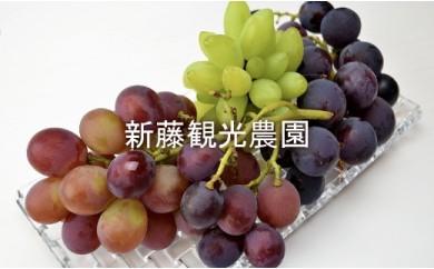 2019年予約開始☆【新藤観光農園】秋限定‼ 葡萄お任せセット☆3種
