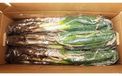 [№5672-0237]関田農園の「鍋料理向き!なべちゃんねぎ(泥付き)」箱5kg