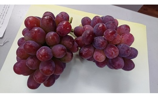 0010-B-094 びぜん葡萄(紫苑)