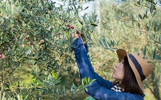 オリーブの実を一粒一粒丁寧に手摘みします