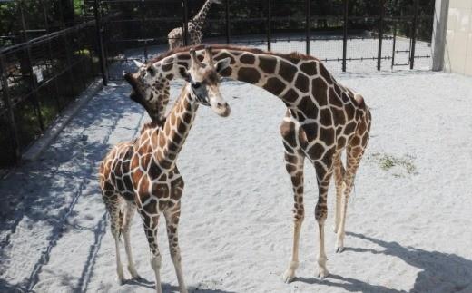 王子動物園グッズ&年間パスポート