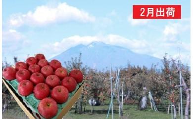 [№5731-0235]2月  サンふじりんご特A約5㎏平川市産(16~20玉)